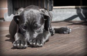 Hund schüchtern Hundehaftpflichtversicherung