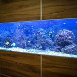 Aquarium Versicherung