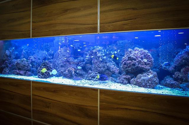 aquarium versicherung notwendig oder berfl ssig. Black Bedroom Furniture Sets. Home Design Ideas